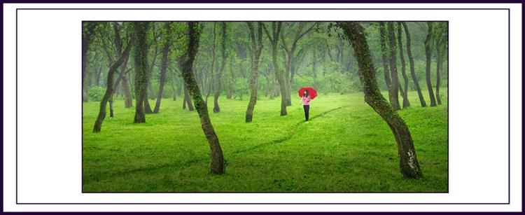 春天的小树林4
