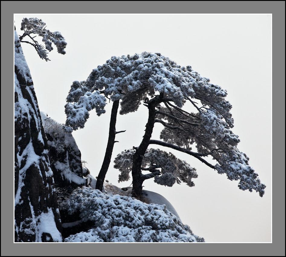国画 树 松 松树 947_852