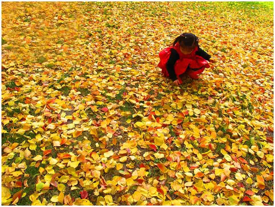 ctps.cn-- 金色的秋天