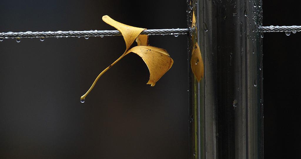 唯美摄影伤感意境图片: 伤感意境雨景图图片下载分享;图片