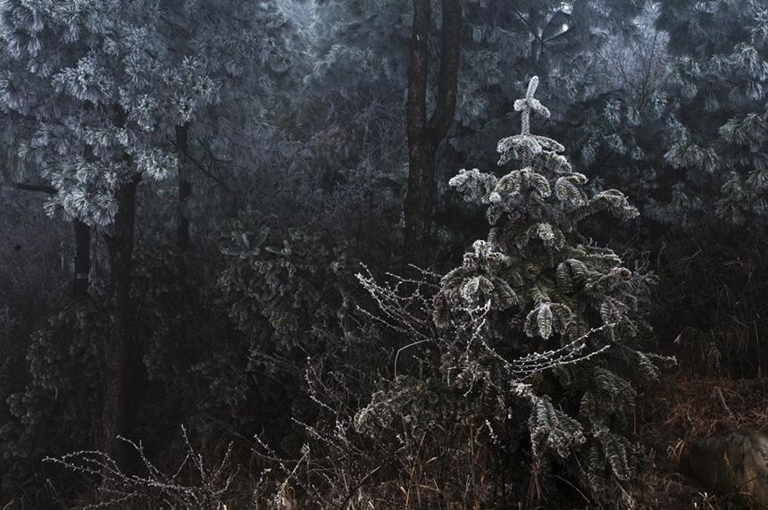 松树林_松树林画_松树林简笔画