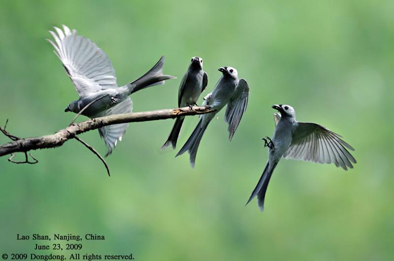 壁纸 动物 鸟 鸟类 雀 800_531