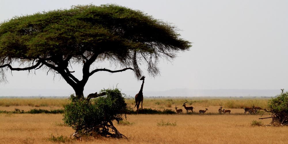 和谐的非洲草原-肯尼亚