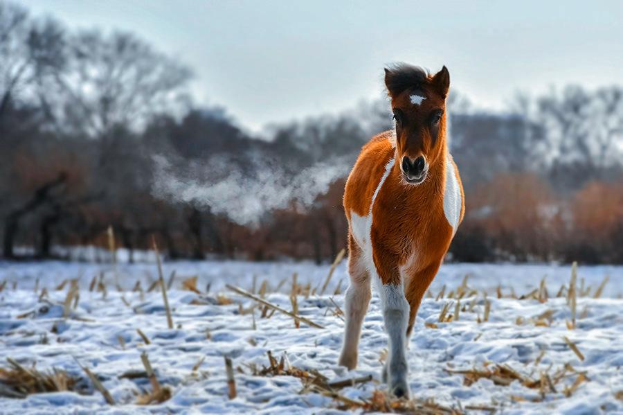 微信头像图片动物马