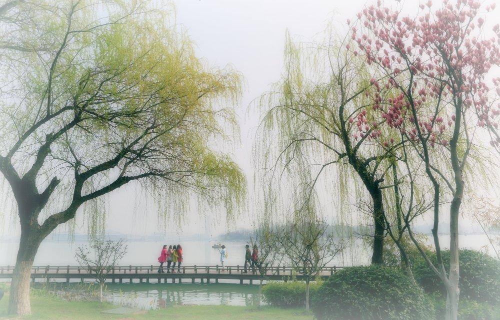 江南春燕子柳树