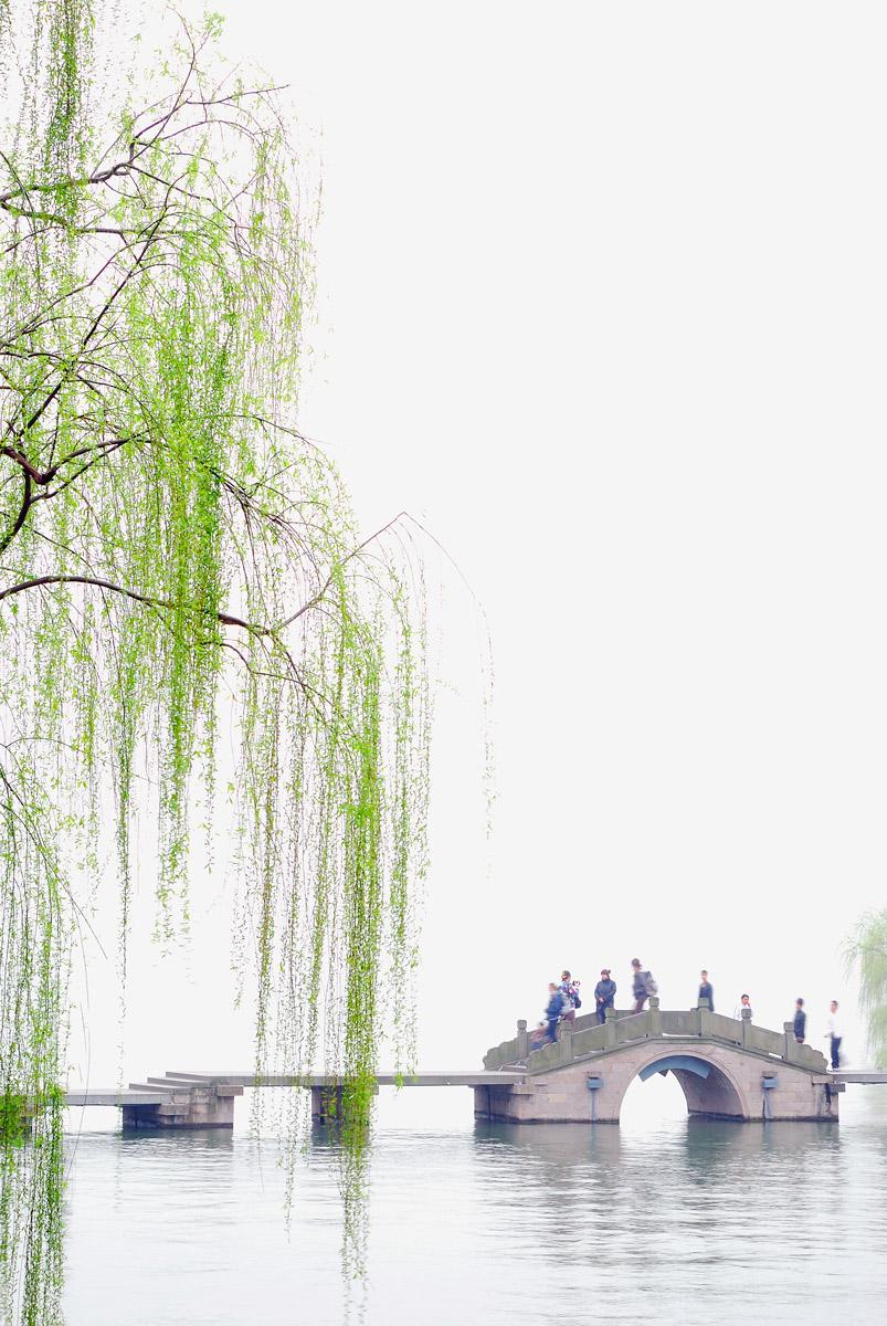 西湖 春天 柳树高清