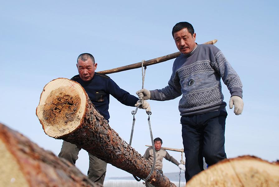 林业工人之歌